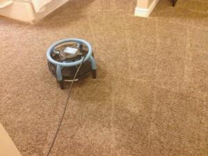carpet cleaning in Utah