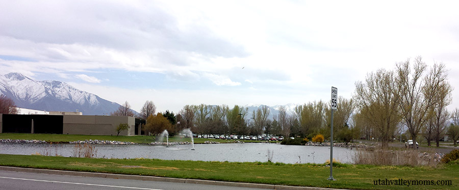 springville duck pond