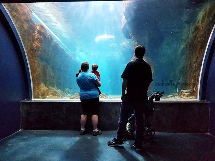 Living Planet Aquarium Discount Tickets