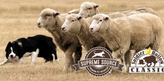 Soldier Hollow Classic & Sheepdog Championship