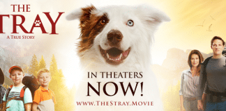 The Stray movie review